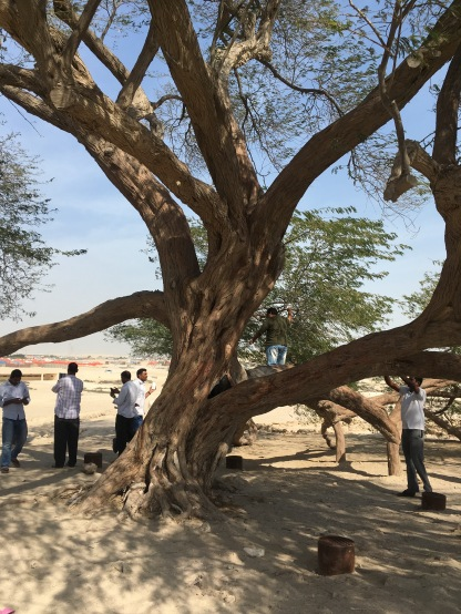 The 400 year old Tree of Life in the middle of the desert